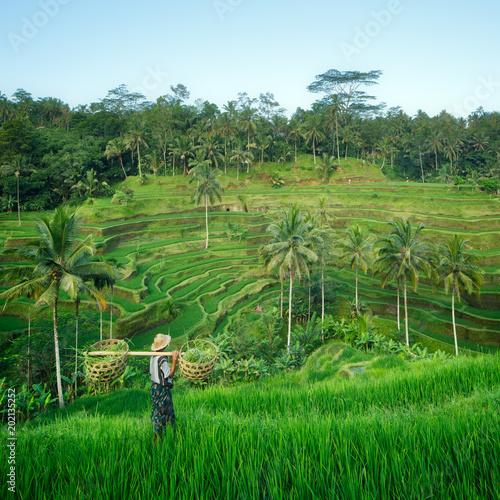 Plexiglas Rijstvelden Bali rizière en terrasse, Ubud, Bali