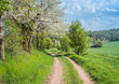 canvas print picture - idyllischer Feldweg im Frühling