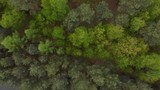 Aerial footage 4K over pine forest at spring, flying up and reveal - 202139037