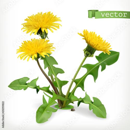 Dandelion flowers, 3d vector icon - 202151822