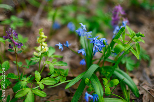 Fotobehang Groene Very beautiful spring forest flowers