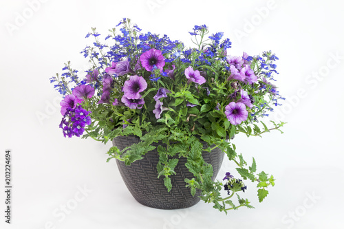 Sticker Floral Triple Threat Planter