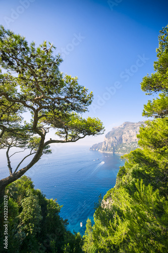 Fotobehang Napels View through pine trees to the iconic cliffs of Capri Island in Italy.