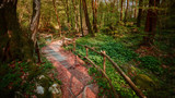 Sentiero nella foresta - 202240450