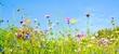 Leinwandbild Motiv Blumenwiese - Hintergrund Panorama -  Wildblumen Wiese