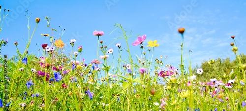 Leinwanddruck Bild Blumenwiese - Hintergrund Panorama -  Wildblumen Wiese