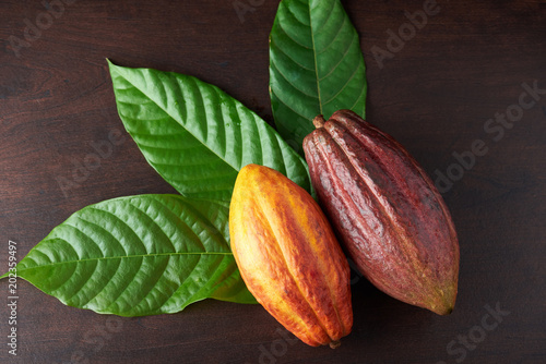 Temat rolnictwa Cacao