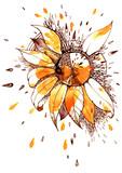 sunflower - 202367697