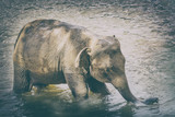 Elephant bathing in a river