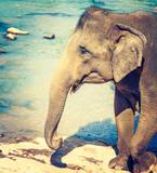 Elephant cub bathing in a river.