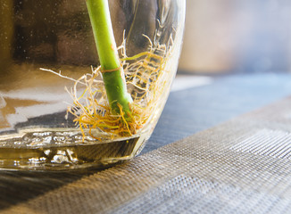 bamboo root in a bottle on the table macro