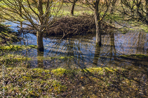 Flood water remains under the leafless trees in early Spring on sunny day - environmental nature background - 1