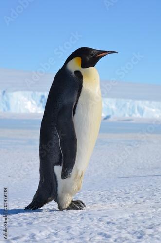Foto Spatwand Antarctica Antarctica penguins