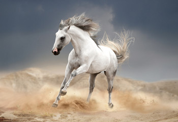 andalusian horse running in desert