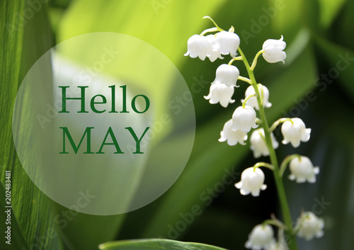 Aluminium Lelietjes van dalen Hello May greeting card with lily of the valley flower on a blurred green leaves background.Springtime concept.Selective focus.