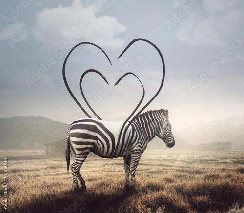 Fototapeta Zebra and heart stripes