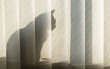 The cat sits behind the blinds on the window in the sunlight
