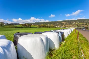 paysage rural, Grande Ferme, Bourg-Murat, Plaine des Cafres, île de la Réunion