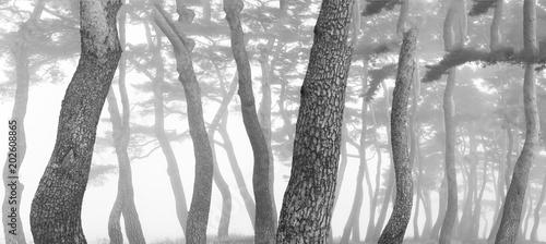 늙은 소나무의 아름다운 자태 - 202608865