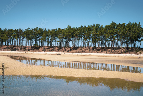 Plexiglas Blauw 해변에서 본 소나무동산