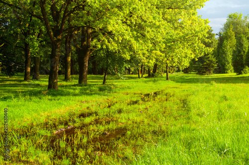 Fotobehang Lime groen Spring landscape. Green trees and flooded spring lawn in the park in sunny day