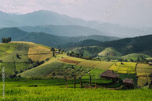 Plexiglas Rijstvelden Green Terraced Rice Field in Pa Pong Pieng , Mae Chaem, Chiang Mai, Thailand