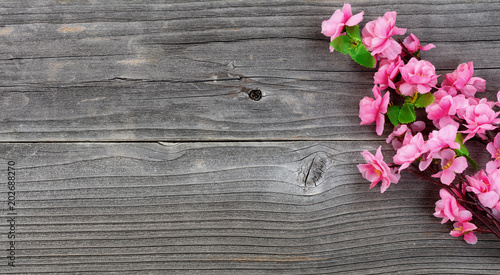 Fototapeta Cherry Blossom branches on vintage wood in overhead view