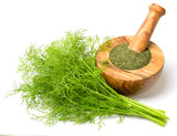 dried dill weed in the wooden mortar, with fresh dill weed isolated on white - 202708495