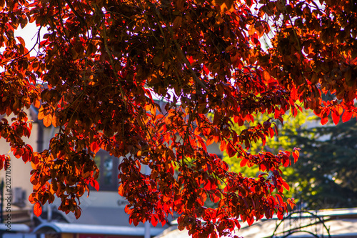 Plexiglas Chocoladebruin Colorful branches of tree