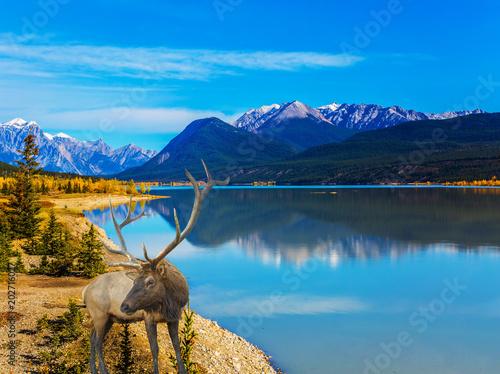 Fotobehang Hert Fantastic deer and Indian Summer