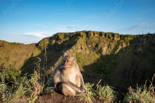 Plexiglas Aap monkey sitting on a volcano