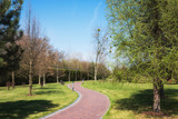 Green spring sunny city park with road and beautiful trees alley - 202728419