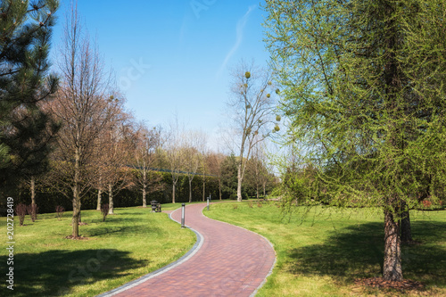 Fototapeta Green spring sunny city park with road and beautiful trees alley
