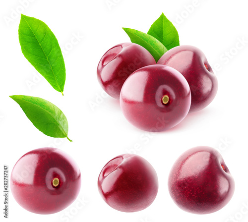 Isolated sweet cherries. Collection of cherry fruits without stems isolated on white background with clipping path