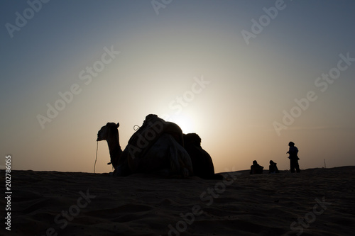 Plexiglas Kameel Silhouette of camel and three persons against sunset in the desert