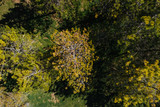 Aerial view of pine trees