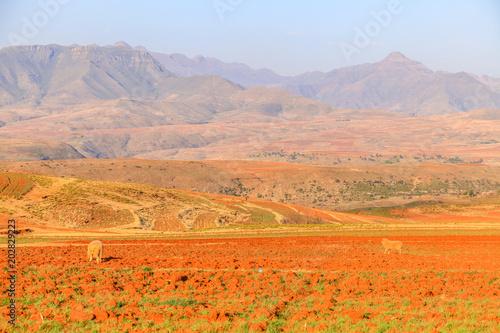 Aluminium Oranje eclat Malealea street village near mountain and cultivation field