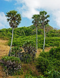 Tropical landscape in Phuket Thailand