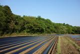 畑と森 - 202840841