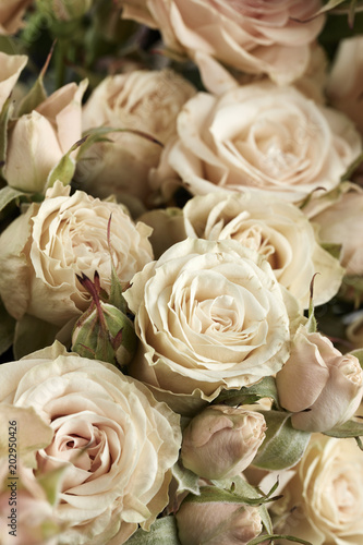 Background of beautiful roses