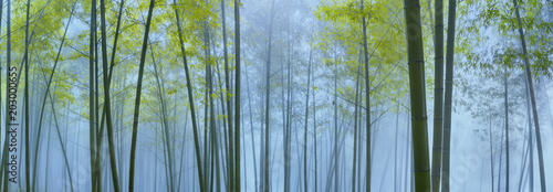 Bamboo forest in mist - 203000655