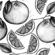 Vector seamless pattern with ink hand drawn citrus fruit, flowers, slice and leaves sketch. Vintage background with grapefruit plants. - 203052081