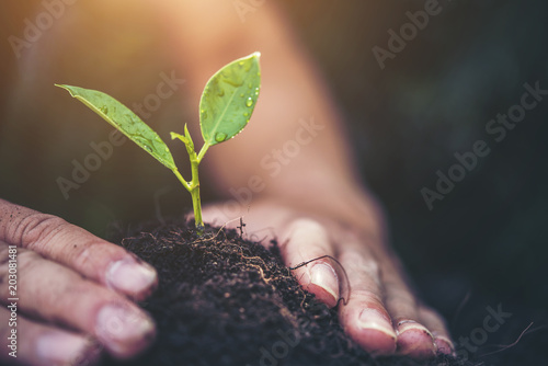 two hands holding and caring a young green plant with warm sunlight - 203081481