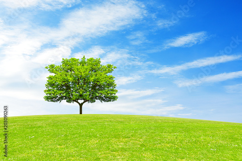 Fotobehang Lime groen Tree, hill and blue sky