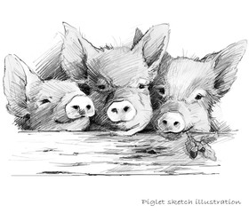 Cute piglet. Pig hand drawn pencil sketch illustration © Елена Фаенкова
