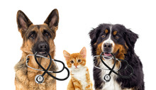 Dog Veterinarian And Cat Sticker