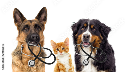 Fotobehang Kat dog veterinarian and cat