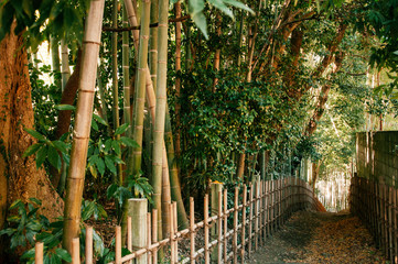 Bamboo forest and small dirt alley, Sakura city, Chiba, Japan