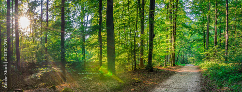 Forest panorama in summer, idyllic pathway with sunrays shines through trees in park - 203104291