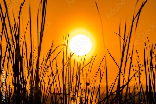 Aluminium Oranje eclat Sunset 3